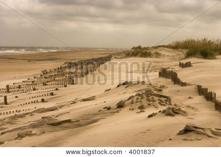 Pea Island Dunes