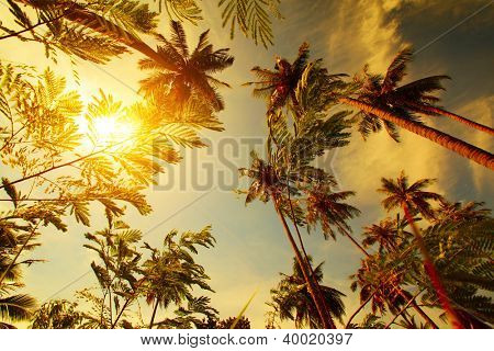 Tall palm trees in a garden and cloudy sky with sun