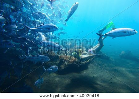 Underwater shoot of a woman diving on a breath hold by school of fish