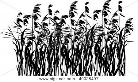 illustration with rush silhouettes isolated on white background