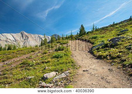 Path on Parker Ridge