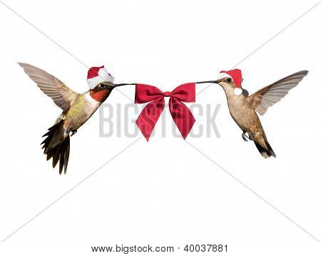 Two Hummingbirds in flight, wearing Santa hats carrying a red bow; isolated on white