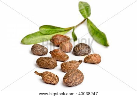 Shea Nuts On White
