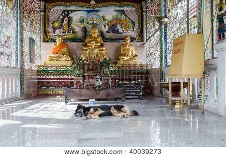 Sleeping dog at  Buddhist Temple, Thailand