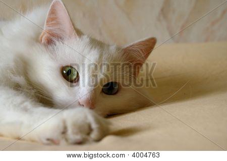 Lovely_Kitty