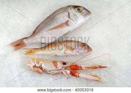 three fish on ice