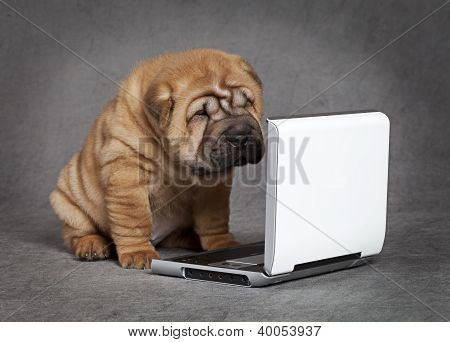 Shar-pei Puppy Dog With Dvd Player