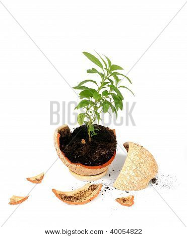 Broken Flowerpot
