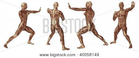 High resolution concept or conceptual human or man 3D anatomy body with muscle isolated on white background as metaphor to medicine,sport,male ,muscular,medical,health,biology or fitness group or set