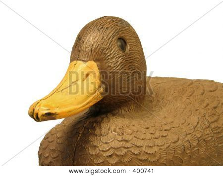 Decoy Duck