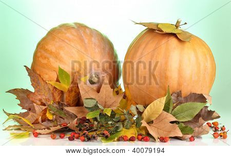 Two ripe orange pumpkins with yellow autumn leaves on green background