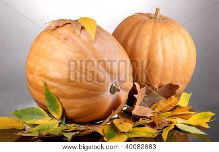 Two ripe orange pumpkins with yellow autumn leaves on grey background