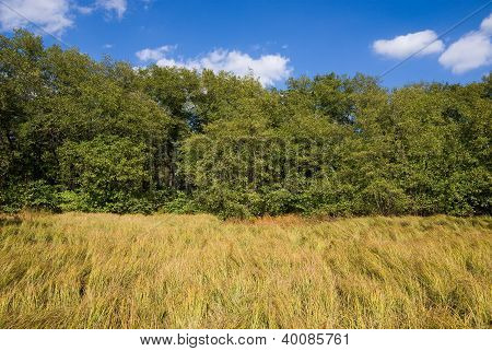Grass, Forest And Sky With Clouds