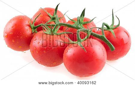 Close up of fresh wet tomatoes isolated on white background