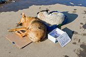picture of stray dog  - Stray dogs sleeping on the ground - JPG