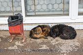 stock photo of stray dog  - Stray dogs sleeping on the ground in Samara - JPG