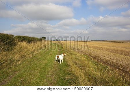 Bridleway And Dog