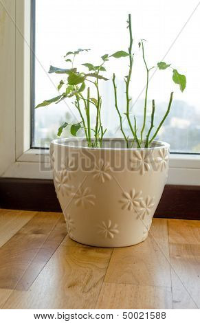 Shabby Shed Leaves Plant Beautiful Ornamented Pot