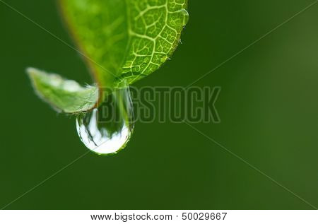 Rain drop on a leaf close up
