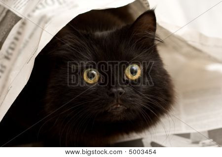 Cute Black Cat Under A Newspaper