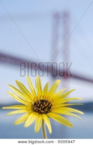 Margarita amarilla y Lisboa puente 25 de abril