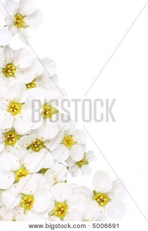 Flor nupcial