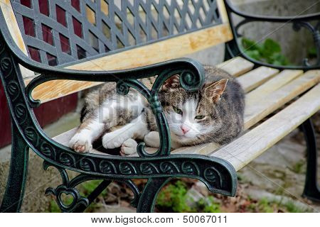 Lazy Cat Is Lying On The Bench