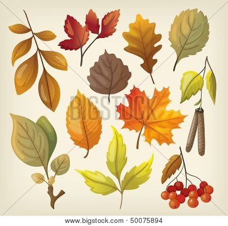 Set of colorful isolated autumn leaves.