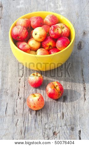 Many Small Red Apples