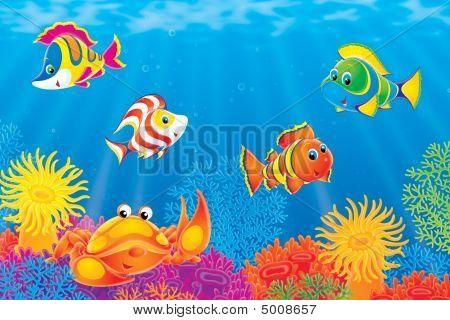 Krabben und Korallen Fische