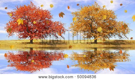 Autumn landscape with the falling leaves