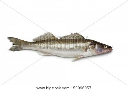 Fresh Zander fish on white background
