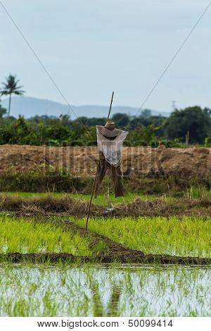 Vogelscheuche In Paddy, Chiangmai Thailand