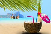 stock photo of phi phi  - Coconut on the beach in Phi Phi island Thailand - JPG