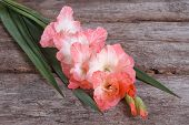 image of gladiolus  - soft pink gladiolus flower on old wooden table - JPG