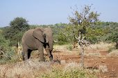 stock photo of veld  - Kruger park South Africa - JPG