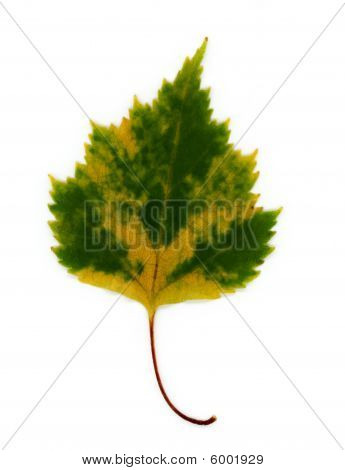 Changing Leaf
