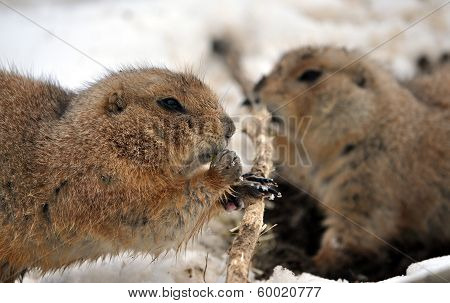 view of gophers in winter