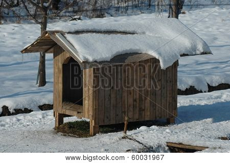 Doghouse in sunlight winter