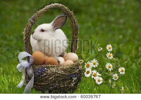 Easter basket and the Easter bunny