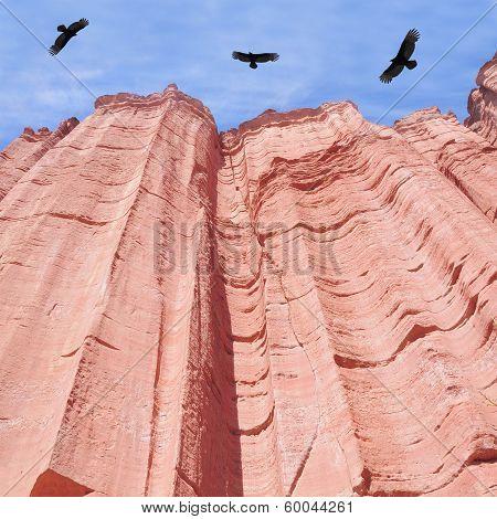 Condors.