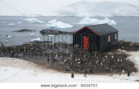 Port Lockroy In The Snow