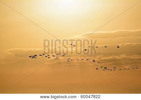"Birds Flying In a ""V"" Formation"
