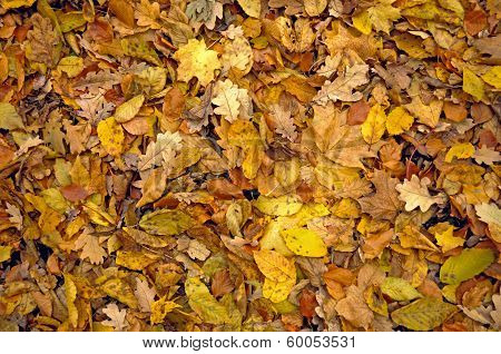 The Withered Leaves Of Autumn