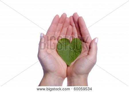 Heart Shaped Leaf In Girls Hands
