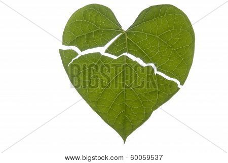 Heart Shaped Leaf Broken
