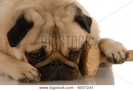 Pug With Dumbell