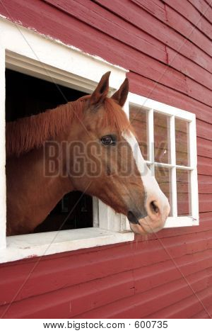Horse Looks Out Window