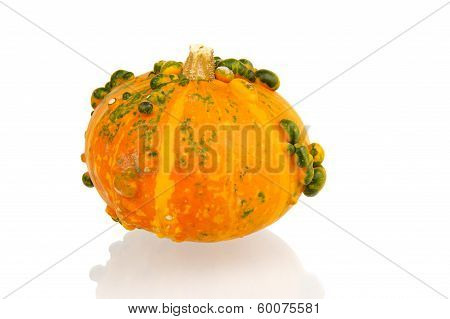 Orange Calabash With Green Bulbs