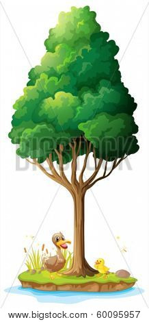 Illustration of a duck and her duckling under the tree on a white background